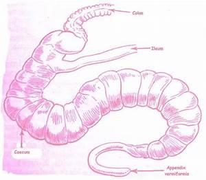 Diagrams  Appendix Diagrams