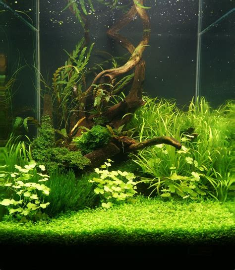 Freshwater Aquascape by Adventures In Aquascaping