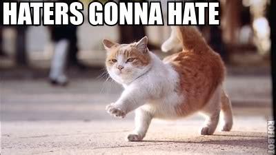 Sassy Cat Meme - sassy cat memes image memes at relatably com