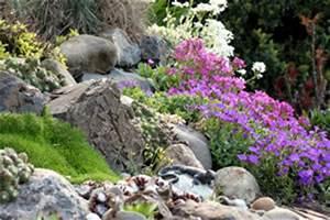 Hang Bepflanzen Bodendecker : steingarten anlegen und gestalten ~ Lizthompson.info Haus und Dekorationen