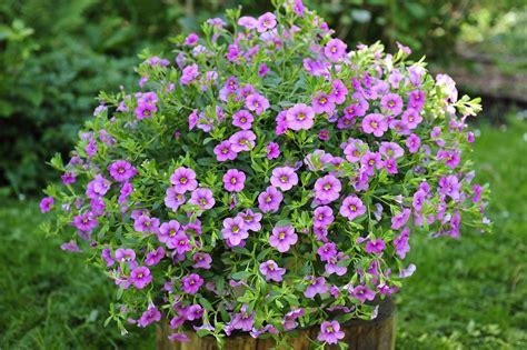 Kübelpflanzen Für Den Schatten by Blumen F 252 R Balkon Im Schatten Blumen Dekoration Ideen