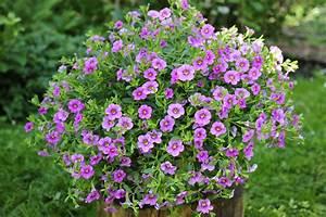 Pflanzen Im Mai : blumen f r balkon im schatten blumen dekoration ideen ~ Buech-reservation.com Haus und Dekorationen
