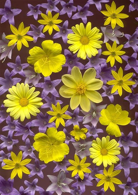 purple and yellow yellow and purple color pinterest