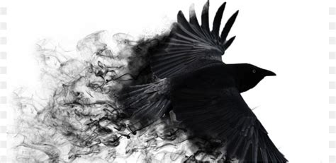 common raven bird  resolution black  white wallpaper