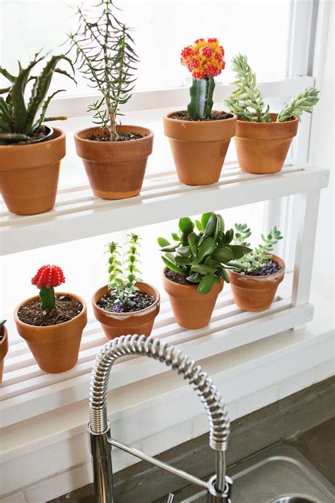 Window Plants by Window Ledge Plant Shelf Maker Crate