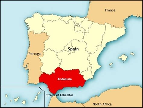 andalusian andalusians developed breed spain ago years