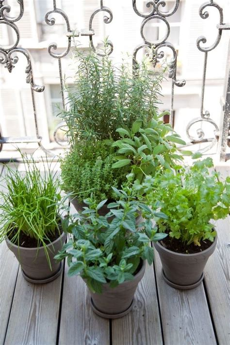 thym en pot entretien 17 meilleures id 233 es 224 propos de jardins muraux sur jardins verticaux jardins