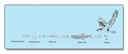Lake Chain Diagram Chains Flathead Knowing Fish