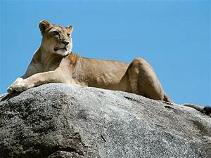 Wild Animals Names: HD Animals Wallpapers 3