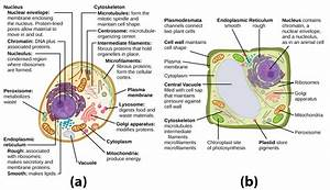 The Cell Wall | Biology for Majors I