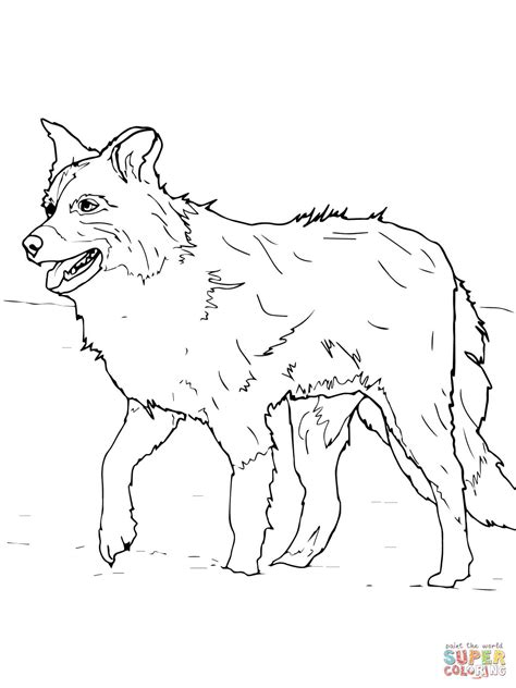 Scotch Sheep Dog Or Border Collie Coloring Page Free