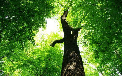 green tree jungle hd desktop wallpapers  hd