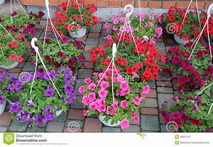 Petunias In Pots For The Garden Stock Illustration - Image