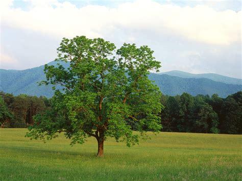 walnut tree ladies against feminism beautiful womanhood 187 a woman a dog and a walnut tree