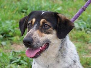 Large dogs Avai... Dogs For Adoption