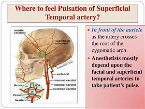 PPT - Clinical Anatomy of the Face PowerPoint Presentation ...