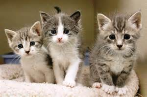 Kitten and Cat Animal Shelters