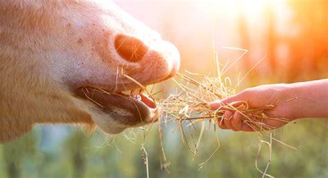 schimmelpilz gifte im weidegras und pferdefutter