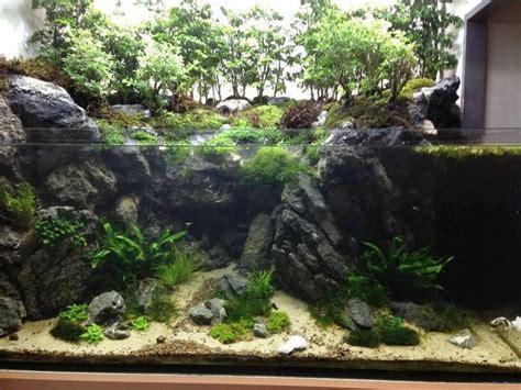 aquarium aquarium freshwater aquarium aquarium fish tank