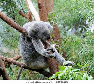 Funny Marsupials - Marsupialia picture gallery | DAILY NEWS