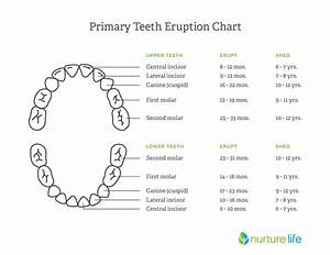 Toddler Teething  What To Expect