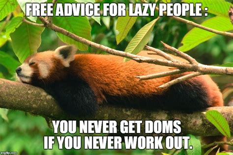 Red Panda Meme - why do you feel sore after exercising 187 science abc