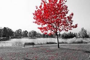 Rote Blätter Baum : h morrhoiden bluten wie kann behandelt werden ~ Michelbontemps.com Haus und Dekorationen