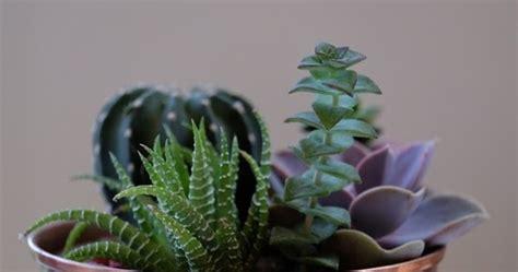 สิ่งควรรู้ สำหรับผู้ที่เริ่มปลูกแคคตัส   Custac-Cactus