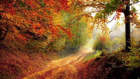 wallpaper autumn forest pathway fooliage hd nature