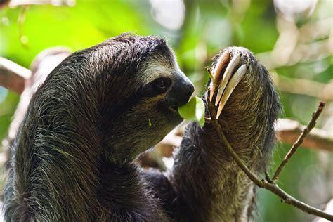 Best 30 Sloth Wallpaper On Hipwallpaper Money Sloth