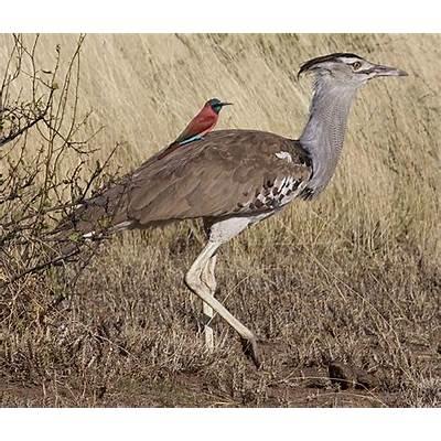 Bird Life - Tanzania safari packages Africa Budget