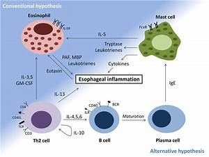 Mechanisms Of Eosinophilic Esophagitis  Conventional