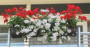 bepflanzung balkon pvblik bepflanzung balkon idee