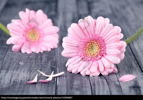 blumen bilder hintergrund blumen hintergrund lizenzfreies bild 14399887