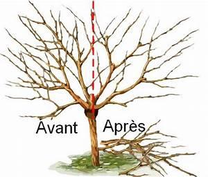 Taille De Cerisier : taille d un cerisier id es d coration id es d coration ~ Melissatoandfro.com Idées de Décoration