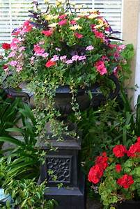 beautiful | Container Gardening & Flowers | Pinterest