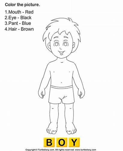 Human Coloring Pages Worksheets Worksheet Preschool Science