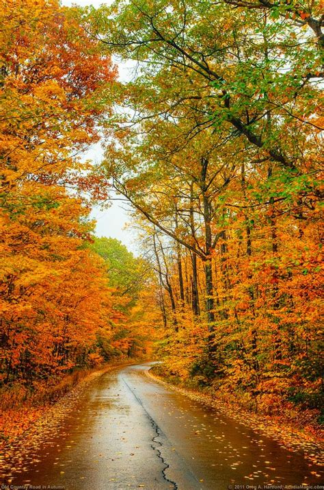 Autumn Images Best 25 Autumn Pictures Ideas On Fall Season