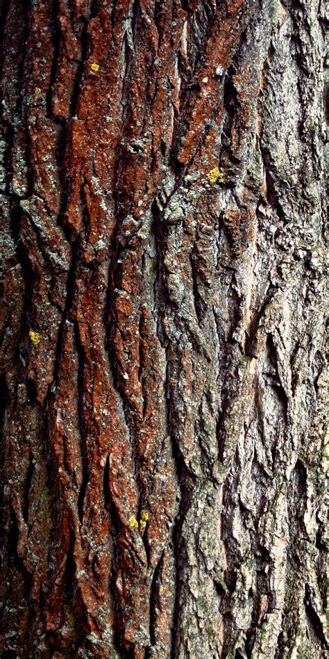 tree barks 3 different tree bark textures reusage