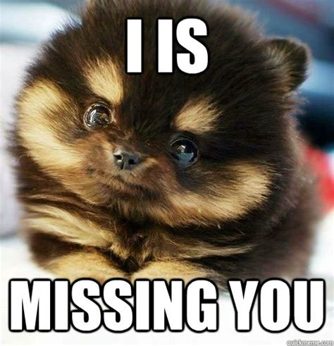 Funny Miss You Meme - 20 funny i miss you memes for when you miss someone so bad sayingimages com