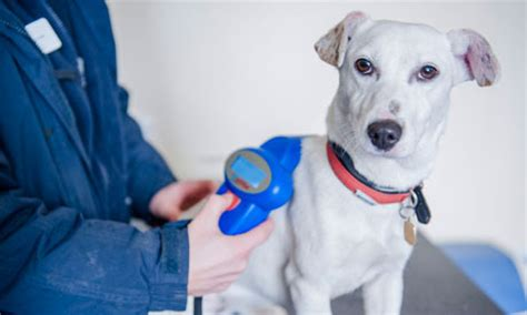 dogs  england   microchipped   life
