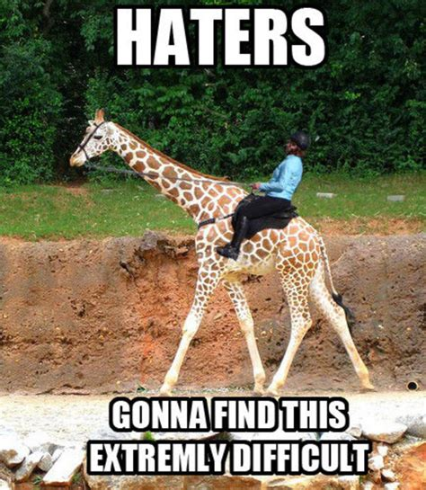 Meme Giraffe - funny giraffe meme