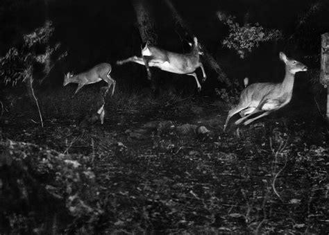 photographs  animals  night literary hub