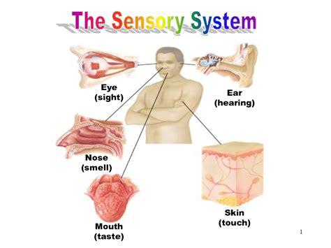 nervous system and sense organs diagrams of sense organs