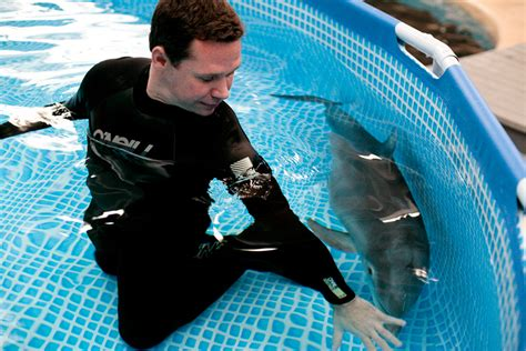 Dolphins as Pets