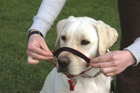 Halti Headcollar Company Of Animals