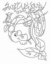 Snake Coloring Pages Boa Ninjago Printable Rattlesnake Constrictor Coral Diamondback Snakes Head Sheet Drawing Getcolorings Sketch Lego Sea Popular Template sketch template
