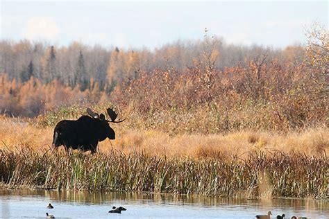 Manitoba Has Hunting At Its Heart