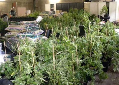 culture cannabis interieur materiel val d oise 1 600 pieds de cannabis d 233 couverts dans une villa inoccup 233 e