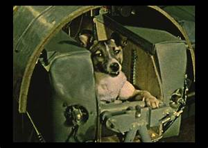 Remembering Laika the Space Dog: Links You Need to See ...
